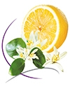 Lemon Flower Half Liter