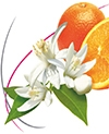 Orange Blossom Half Liter